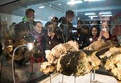 Останки динозавра, обнаруженные на территории Шестаковского комплекса в Кемеровской области во время экспедиции 2008 года