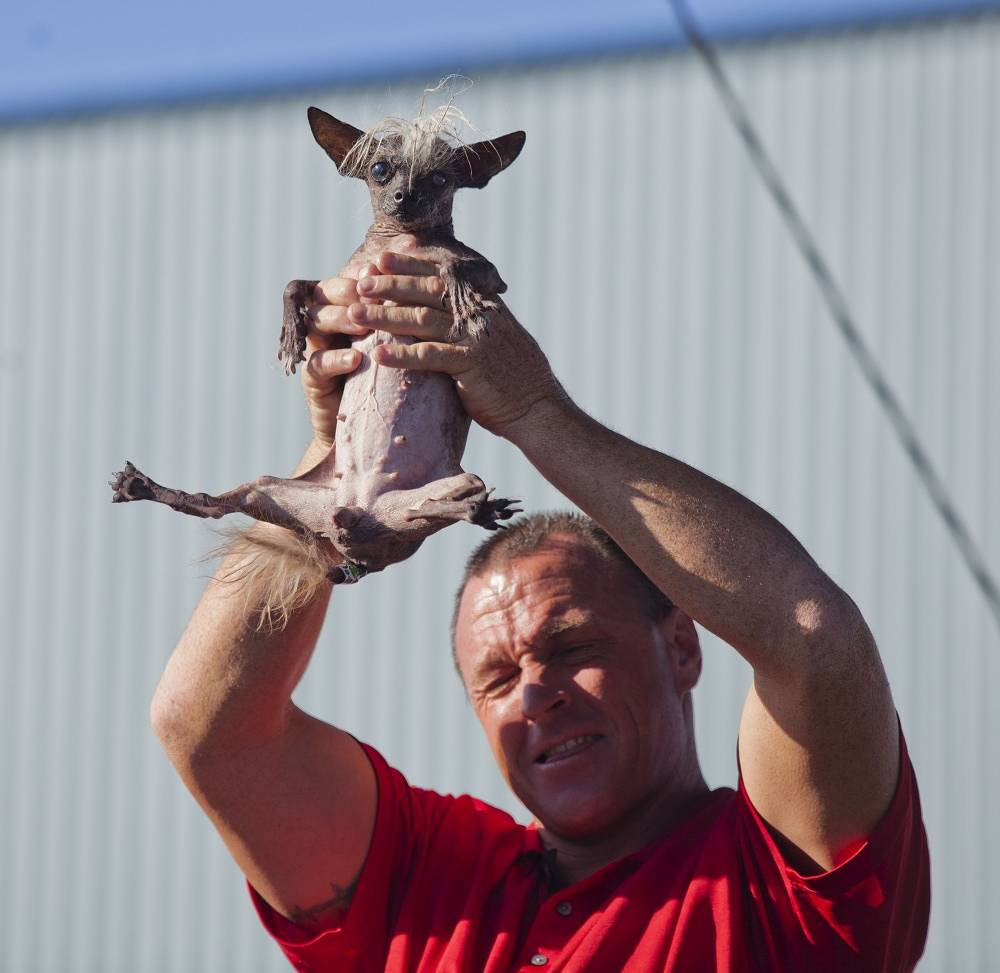 SweePee Rambo held by owner Jason Wurtz from Encino, California