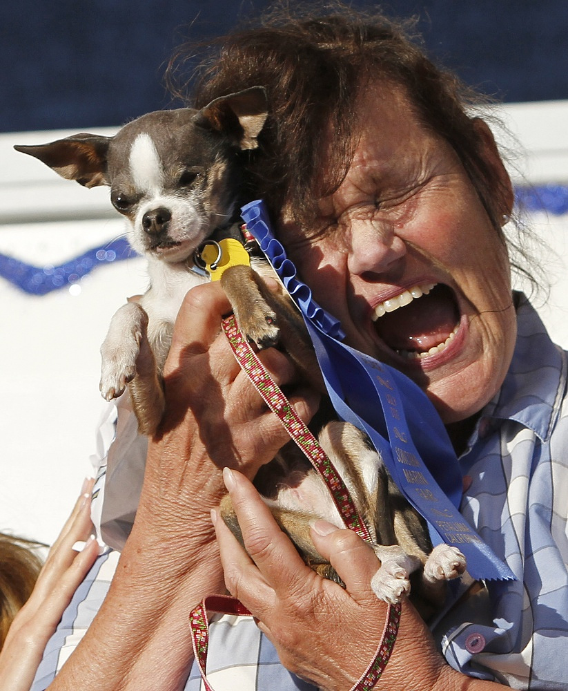 In 2010 the winner was Chihuahua Princess Abby