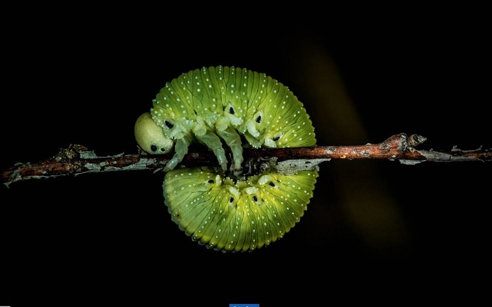 Caterpillar, by Timur Gaifullin (Surgut). Photo: Ulyanovsk region