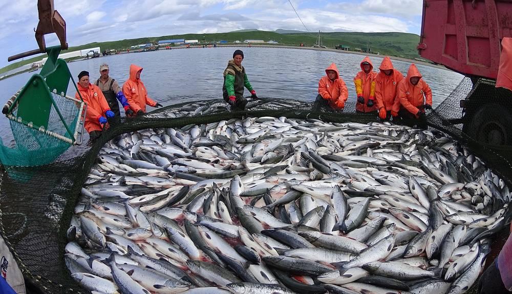 Fishing on the river in the village Ozernovsky in Kamchatka krai