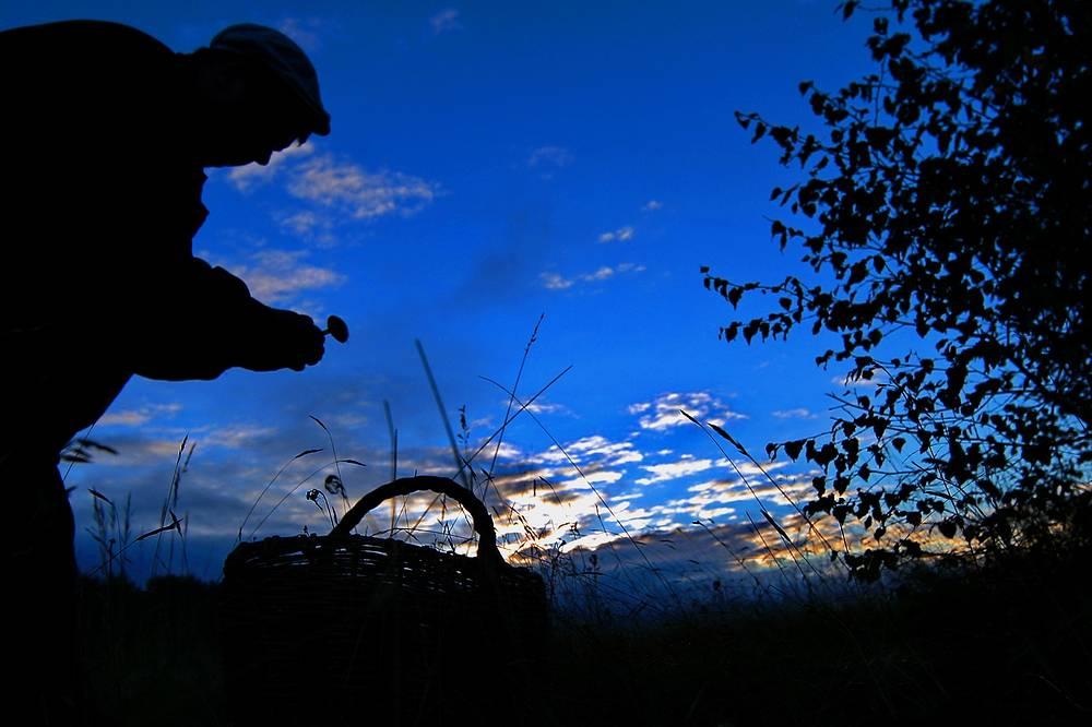 Mushrooms picking in Ivanovo region, Russia, September 14
