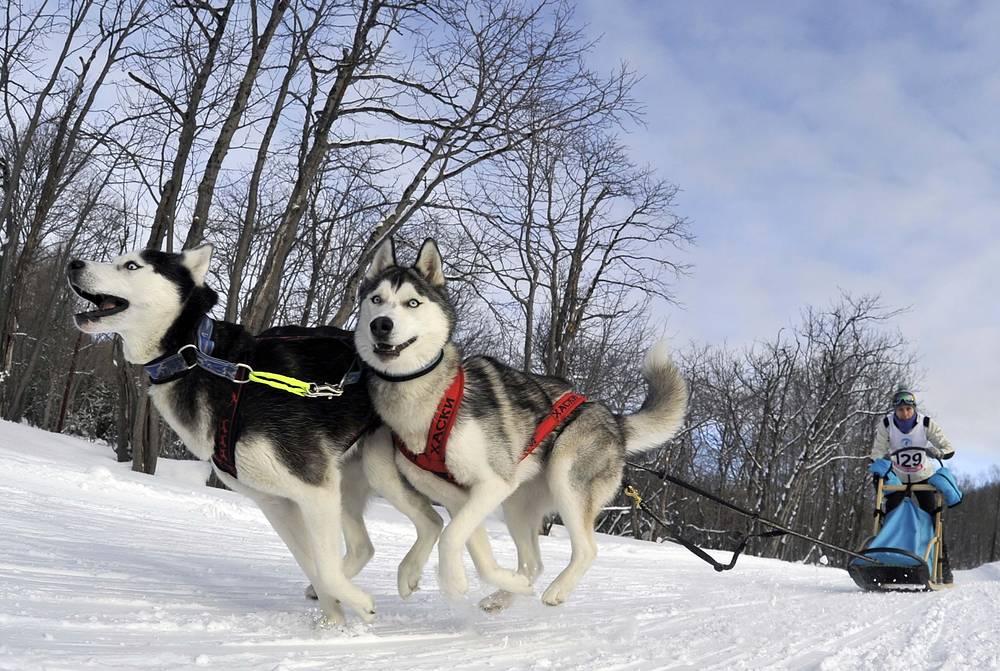 A dog sled race in Kamchatka