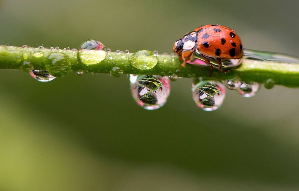 """It is said that if you notice ladybugs looking for shelter, then cold weather is on the way. On the other hand, """"when they swarm, expect a day that's warm"""""""