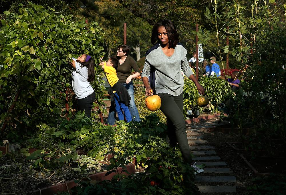 Former US first lady Michelle Obama planted the White House's first organic garden and installed beehives on the South Lawn of the White House. Photo: Michelle Obama carries just-harvested pumpkins while joining with school children to harvest fruits and vegetable from the White House Kitchen Garden, 2013
