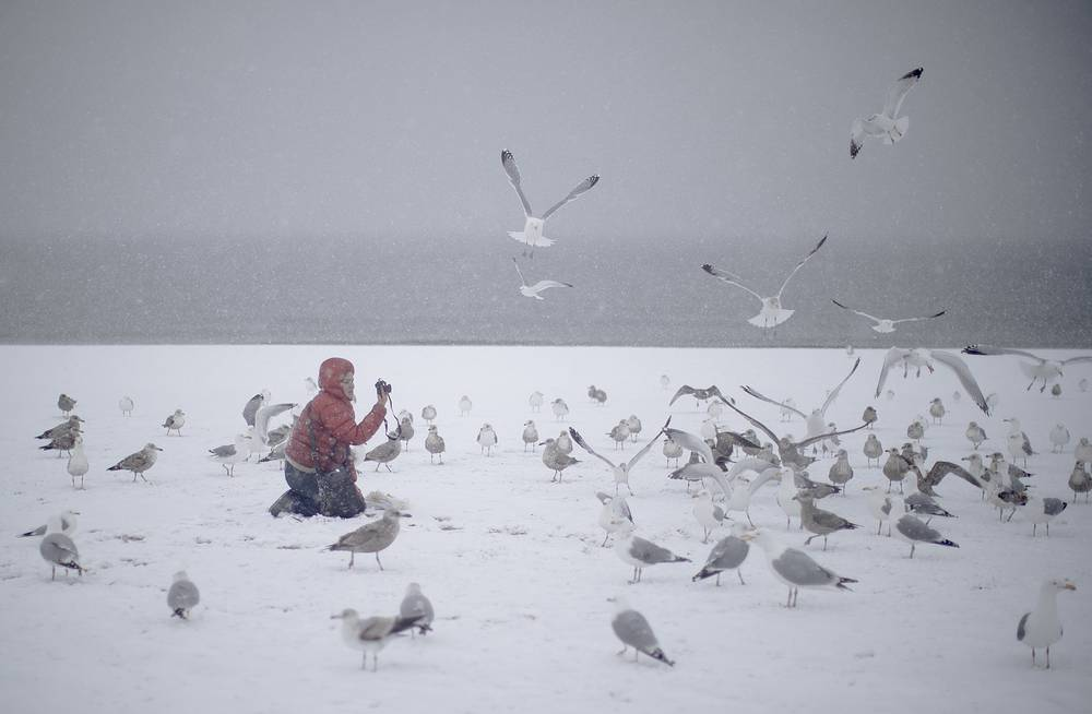 A woman photographs seagulls on the beach on New York's Coney Island during a snow storm