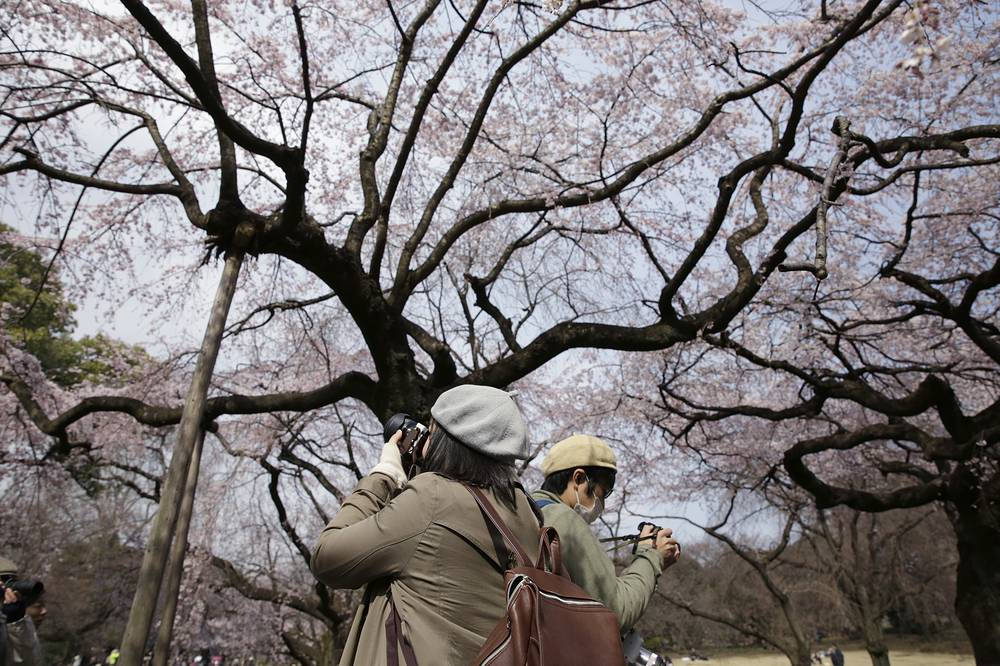 Visitors take pictures of blooming cherry blossoms at a park in Tokyo, Japan