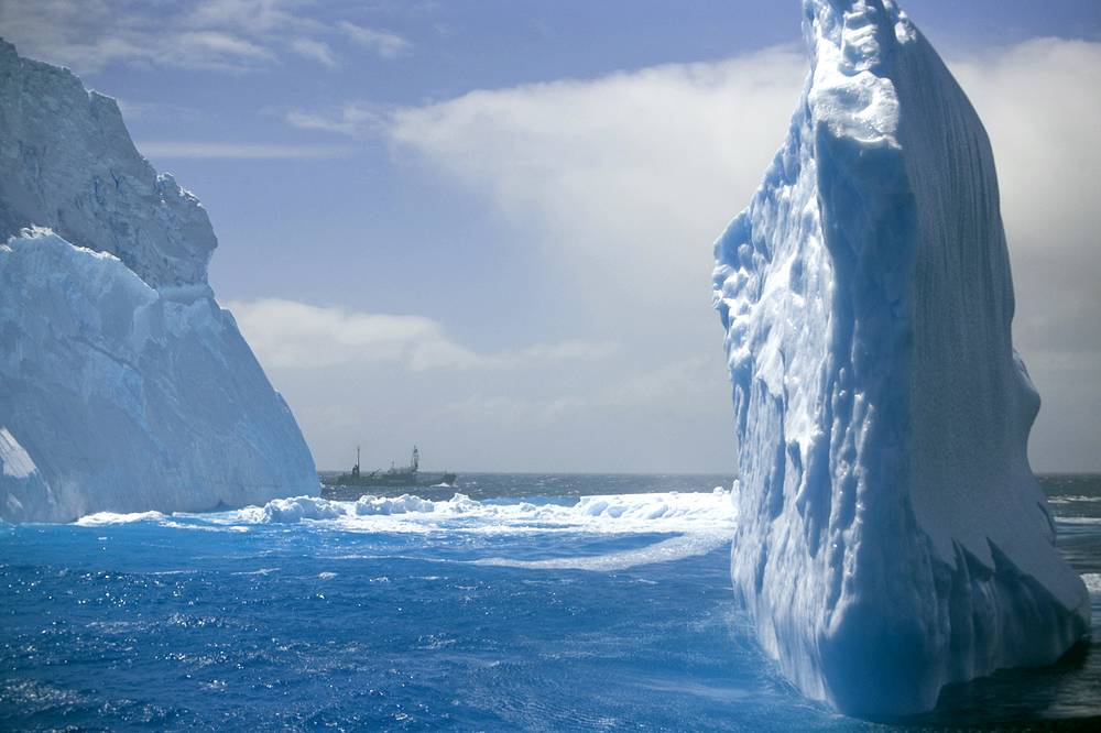 There are 17 different whale species in the Antarctic. Although whaling has been banned since 1986, Japan continues and justifies its whale hunt saying it is a 'scientific whaling'. Photo: Japanese harpoon ship appearing beyond an iceberg in the Antarctic Southern Ocean