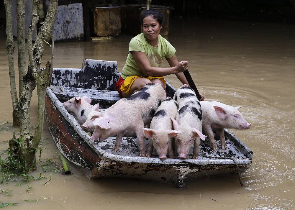 A woman paddles a boat-load of piglets to safety at a flooded village in Quezon city, Manila, July 20