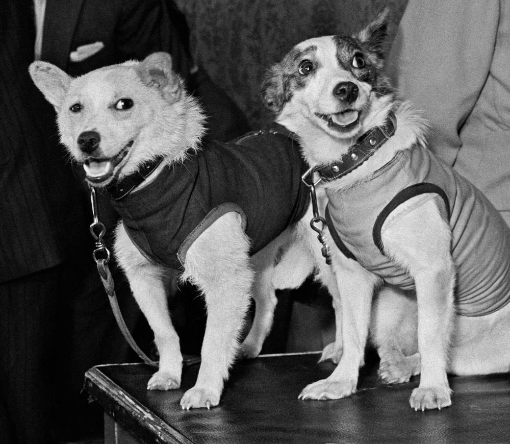 On August 20, 1960, Soviet space dogs Belka and Strelka returned to Earth safely from their orbital flight