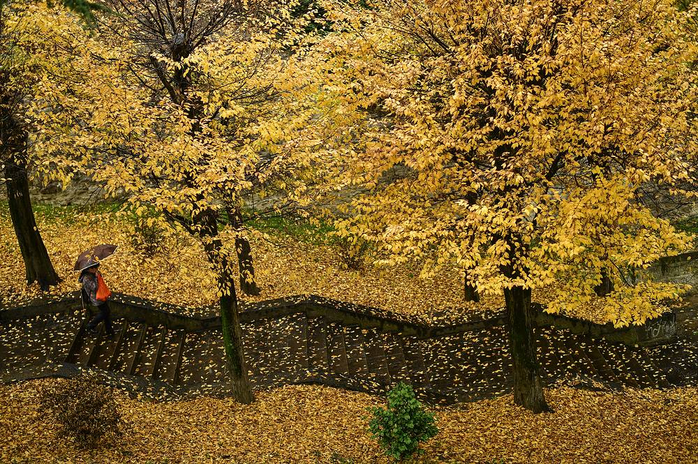A pedestrian walks down a stairway through a row of trees during a rainy autumn day, in Pamplona, Spain, November 20
