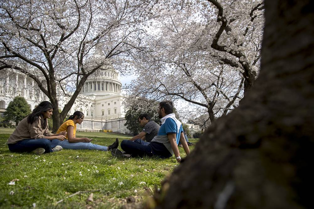 The Dome of the US Capitol Building is visible as cherry blossom trees bloom on the West Lawn in Washington