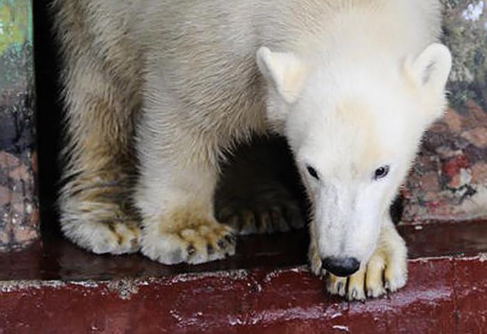 Медвежонок Милка