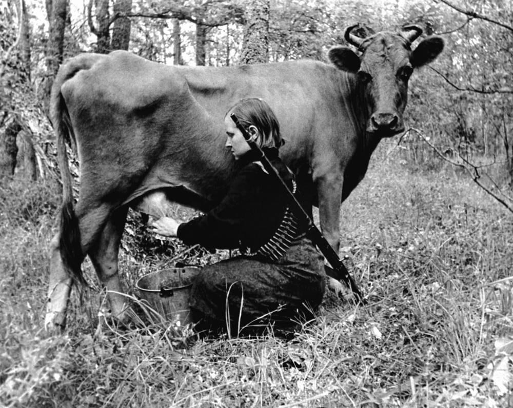 Партизанка  доит корову.