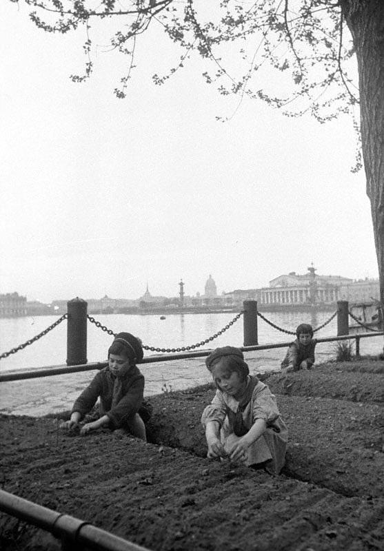 Дети у грядок на набережной в Ленинграде.