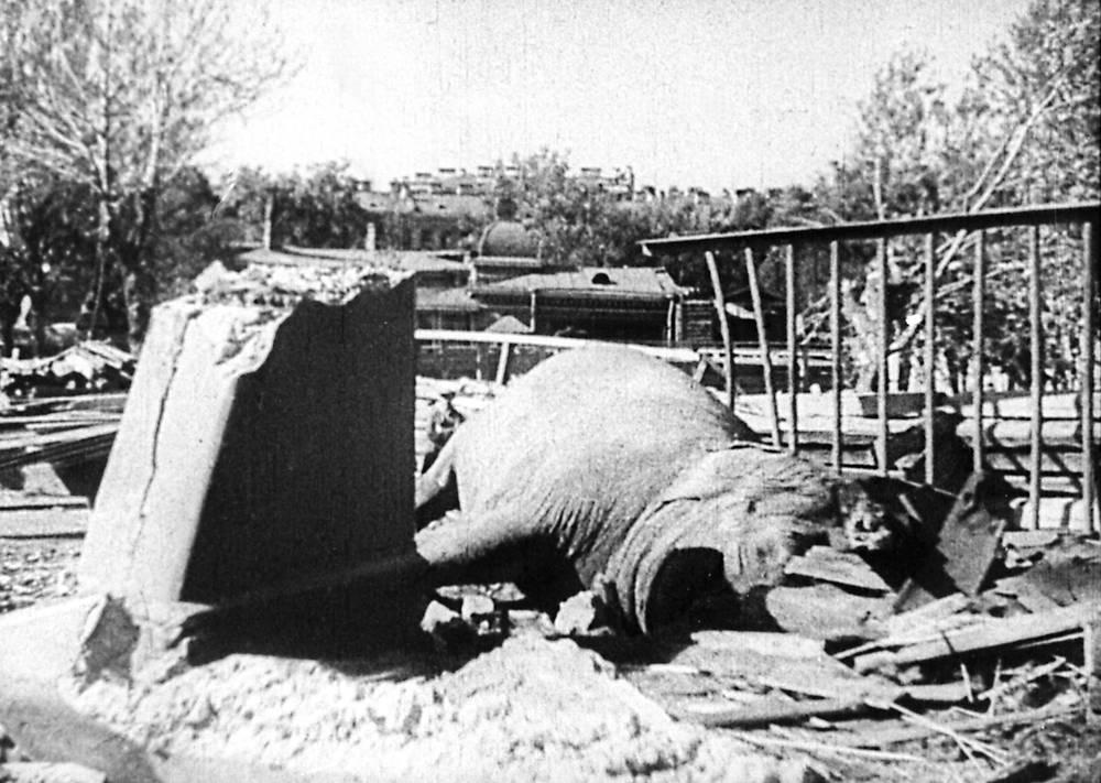 Мертвая слониха Бетти. 10 сентября 1941 г.