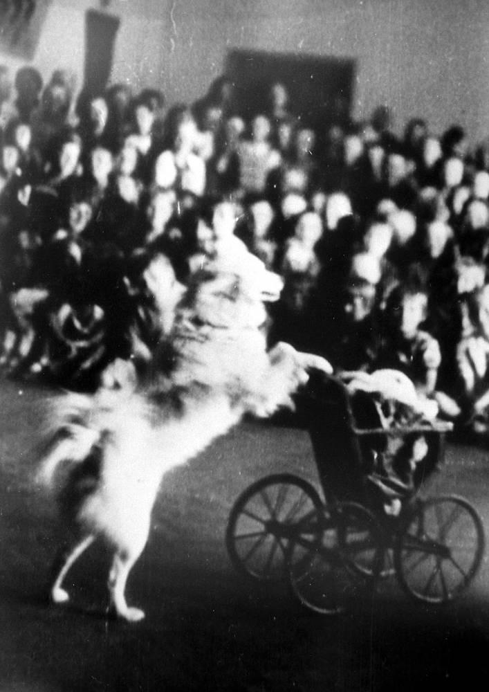 Выступление театра зверей Зоопарка в детском доме . 1943 г.