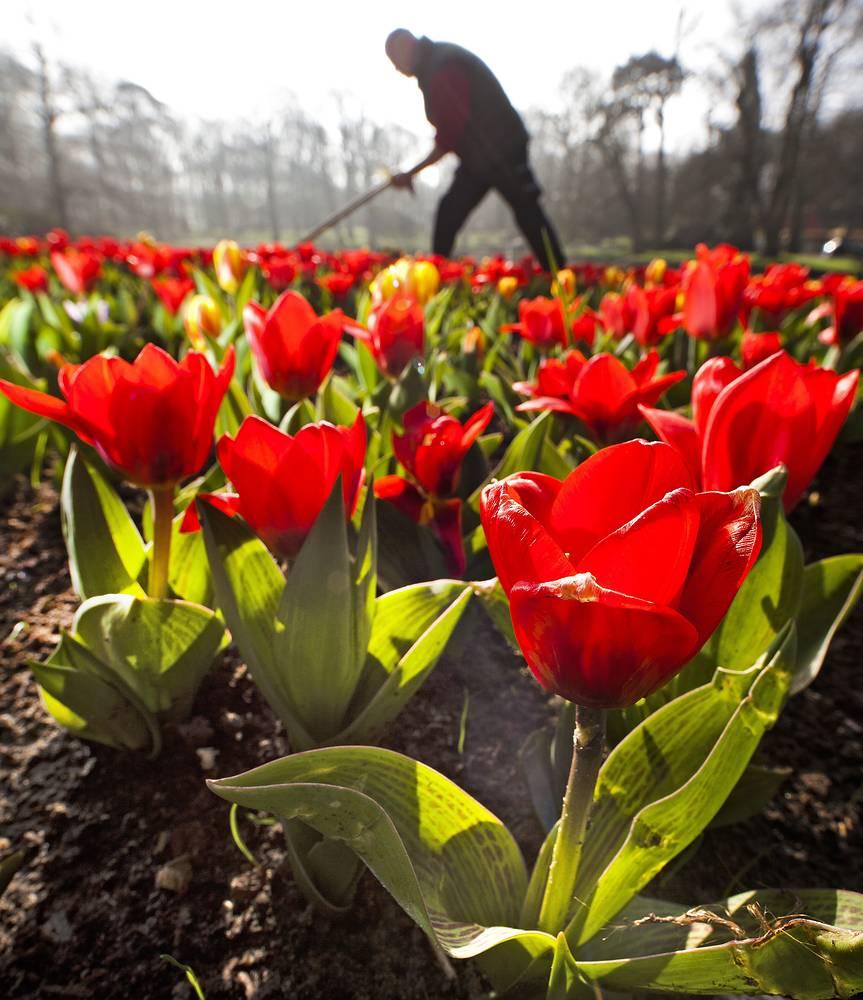 Каждый год в парке выращивают около 7 млн цветов