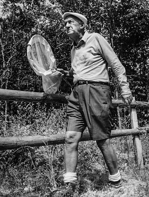 В Швейцарии Набоков посвящал свободное время охоте и ловле бабочек. На фото: Владимир Набоков на энтомологической экскурсии