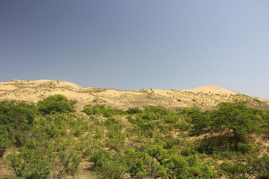 Песчаная гора Сарыкум постоянно меняет свою форму, но не рассыпается.