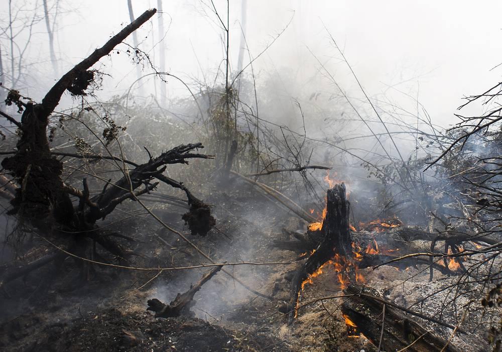 Два лесных пожара продолжают действовать в Кимрском районе на площади 3 га и Калининском - на 5 га