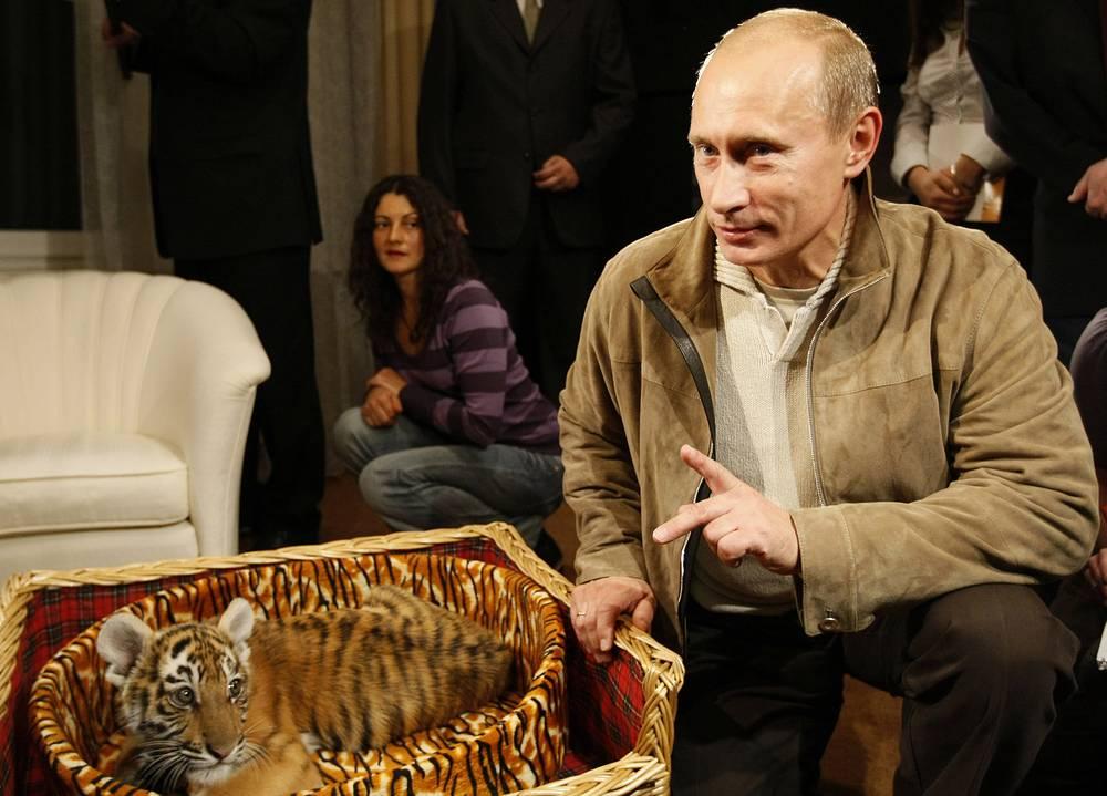 Владимир Путин показывает уссурийского тигренка, подаренного ему на день рождения, 10 октября 2008 года