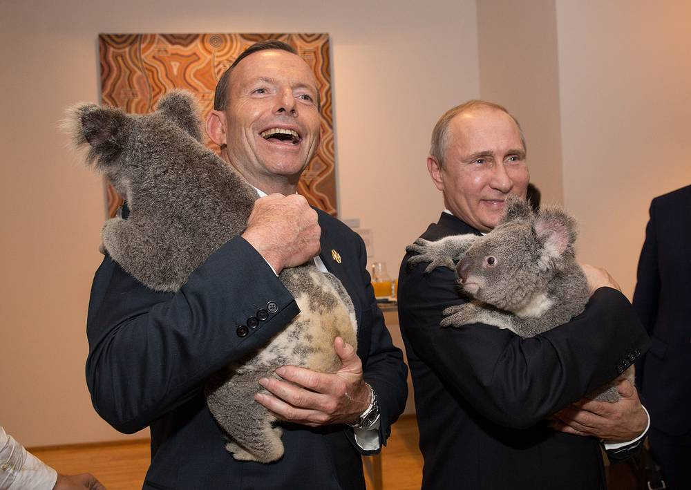 Президент России Владимир Путин и премьер-министр Австралии Тони Абботт на приеме в честь лидеров саммита G20 сфотографировались с коалами, Брисбен, 16 ноября