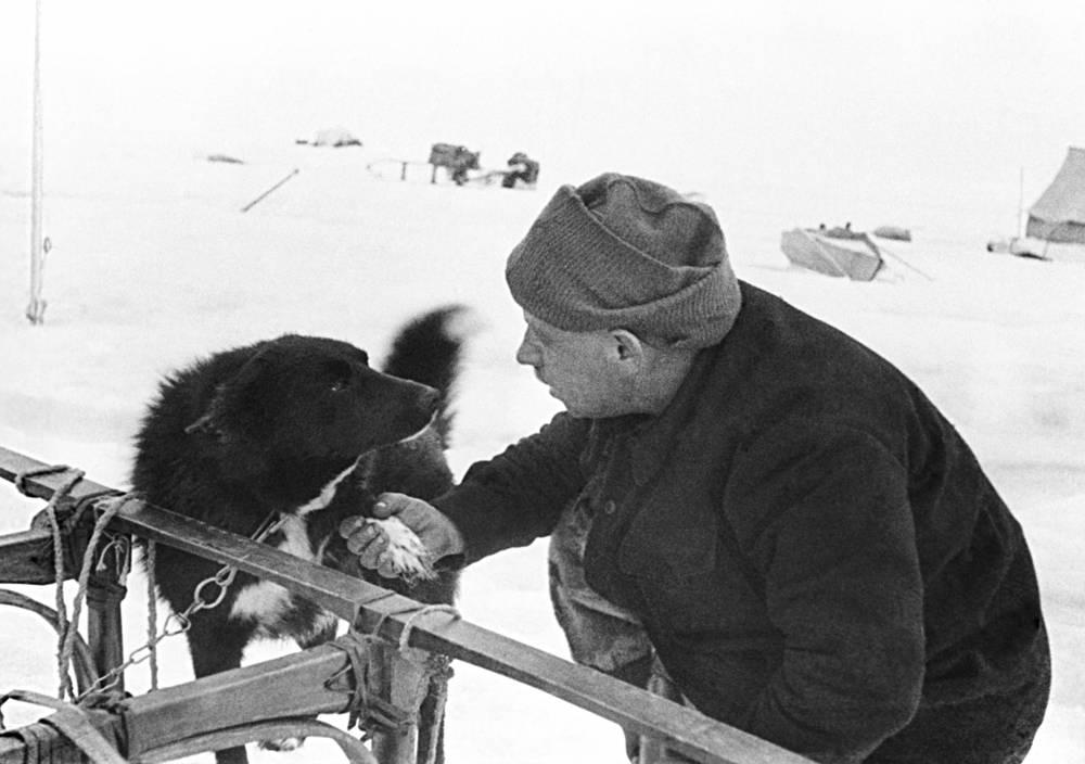 """Необходимость создания дрейфующих станций для изучения Арктики связана с отсутствием суши в центральной части Северного Ледовитого океана, пригодной для устройства постоянных наблюдательных пунктов. Официальное открытие первой в мире дрейфующей станции """"Северный полюс"""" состоялось 6 июня 1937 года. На фото: начальник дрейфующей станции """"Северный полюс-1"""" Иван Папанин и пес по кличке Веселый"""