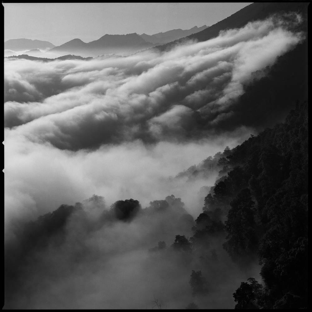 Ингушетия. Северный склон скалистого хребта Цей-Лоам окутан рассветным туманом, скрывающим пышную растительность на верхней границе леса.