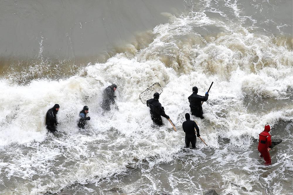 Жители Светлогорска собирают янтарь в Балтийском море