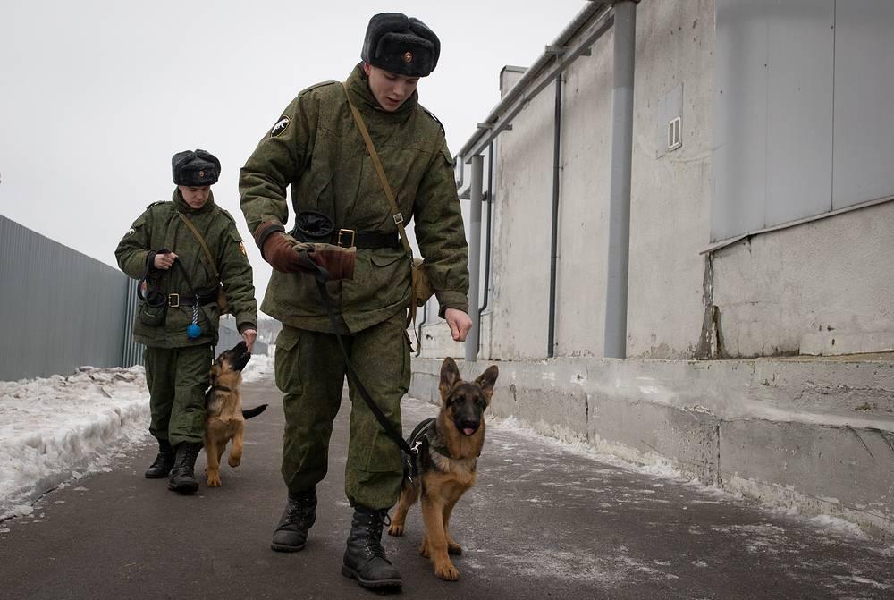 Кинологи дрессируют щенков немецкой овчарки. На фото - военнослужащие применяют вкусопоощрительный метод дрессировки.
