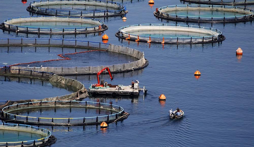 Среди греческих продуктов, импортируемых в РФ до введения эмбарго - рыба и морепродукты