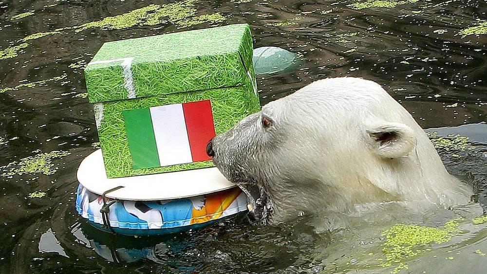 Белый медведь, предсказавший Италии победу в матче