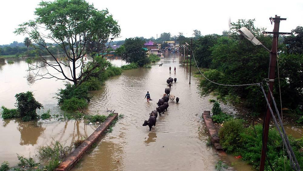 Индия. Фото: EPA/ИТАР-ТАСС