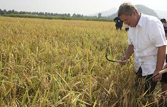Министр сельского хозяйства США Том Вилсэк во время сбора риса в провинции Лагуна, к югу от Манилы. Филиппины, 2009 год