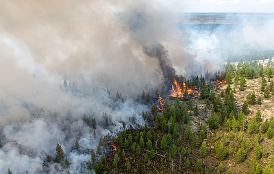 Wildfires engulf almost 24 hectares of forest in Russia's Khanty-Mansi region – officials