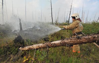 Не зажечь в праздники: как избежать лесного пожара