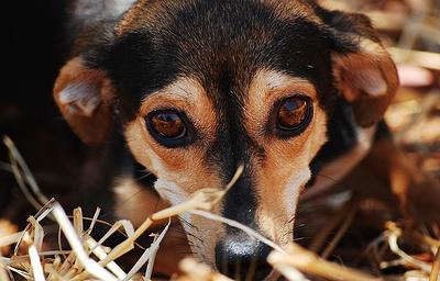 Зоомагазины в Калифорнии обяжут продавать бывших бездомных животных