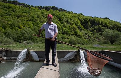 """Компания """"Остров"""" планирует выращивать форель в Северной Осетии"""