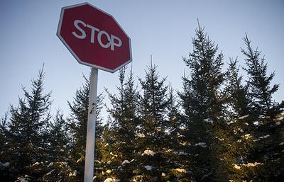 Как встретить Новый год и не навредить экологии