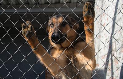 Как тренируют служебных собак на российской военной базе в Абхазии
