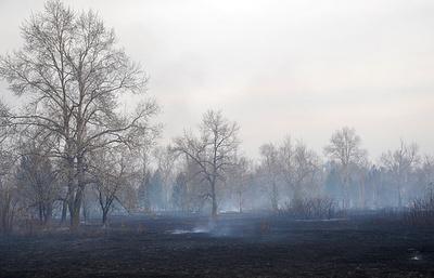 Площадь лесных пожаров в Иркутской области и Бурятии сократилась за сутки почти в 20 раз