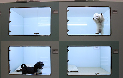 В Великобритании запретили продажу щенков и котят в зоомагазинах