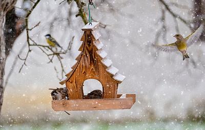 Россиян пригласят заботиться о птицах в холодное время года