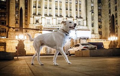Более 70% владельцев собак в Москве предпочли породистое животное дворняжке
