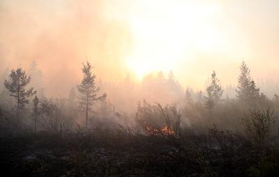 В МЧС сообщили, что от пожаров в Забайкалье пострадали 16 населенных пунктов