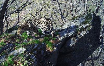 """Ученые в Приморье нашли скалу из мультфильма """"Король лев"""""""