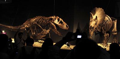 Tи-рекс против трицератопса. Отрывок из почти детективной книги о динозаврах