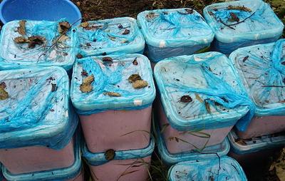 На Камчатке обнаружили тайник браконьеров с 500 кг красной икры