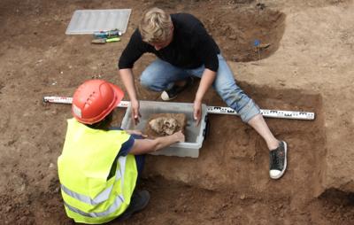 Череп пещерного льва обнаружили археологи в Красноярске